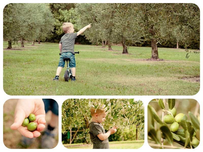 Fotowettbewerb 2017 mit Kindern - Moritz entdeckt die Natur der Olivenbäume. Mach auch tolle Fotos mit Deiner Spiegelreflexkamera